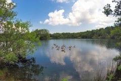 Bantons Lake - wildlife