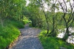 Bantons Lake lush pathways