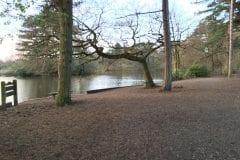 Duck feeding area