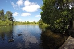 Cuerden Valley Lake shallow side, Fishing in Lancashire