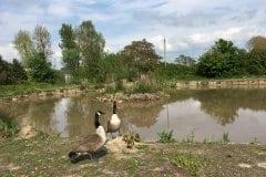 Newer Lake Turbary House Garden Centre