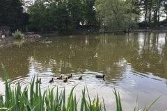Turbary House garden centre fishing