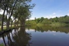 Treelined River Lake