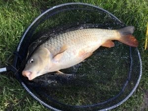 Margin Carp on luncheon Meat