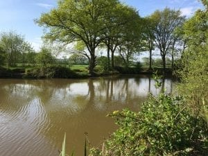 Pond 1 Heskin Old Hall Fisheries
