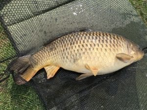 Borwick Carp Fishing In Lancashire